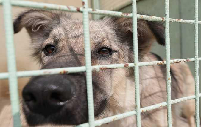 هاشمي لوزير يكشف تفاصيل اجراء تجارب أمريكية على كلاب في أحد مخابر معهد باستور